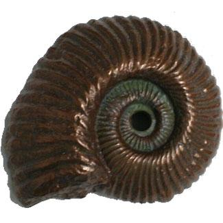 Pentair WallSpring Shell Fossil Nautilus Gray